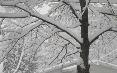 -snow-trees