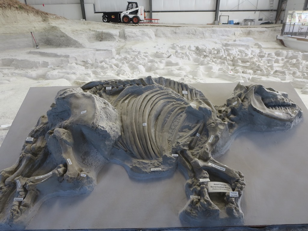 Ashfall Fossil bed