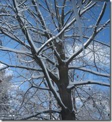 BM13-snow-tree